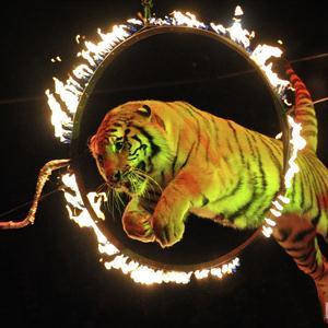 Цирки Романовки