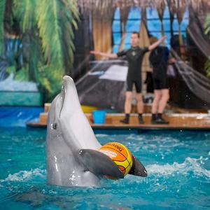 Дельфинарии, океанариумы Романовки