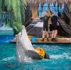 Дельфинарии, океанариумы в Романовке